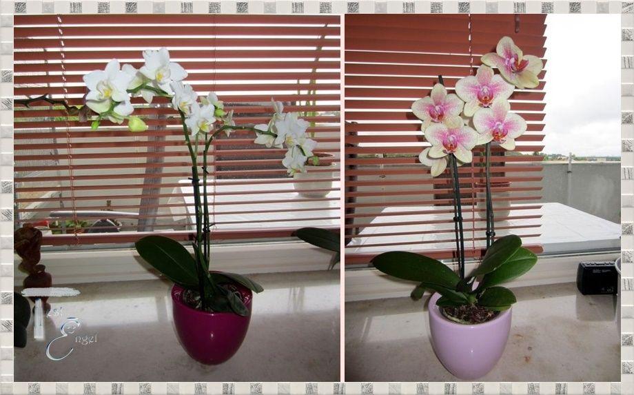 Orchitop – neues für meine Orchideen