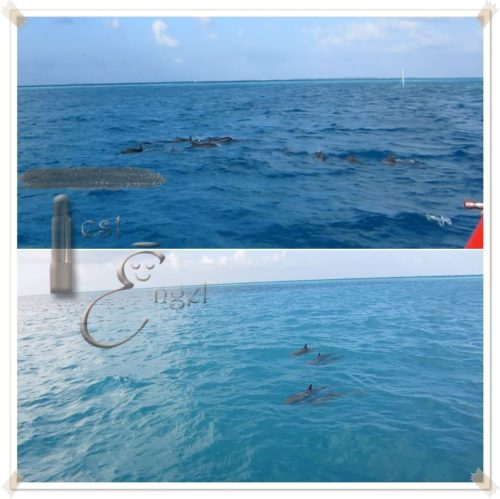 maledive2016-testengel_10