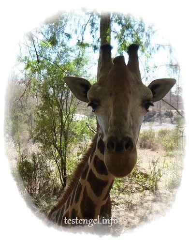 Tansania-Safari – Die Planung