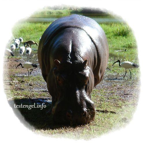 Tansania-Safari – die Vorbereitung