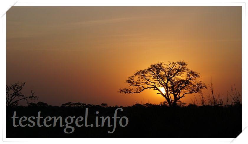 Tansania-Safari – Serengeti
