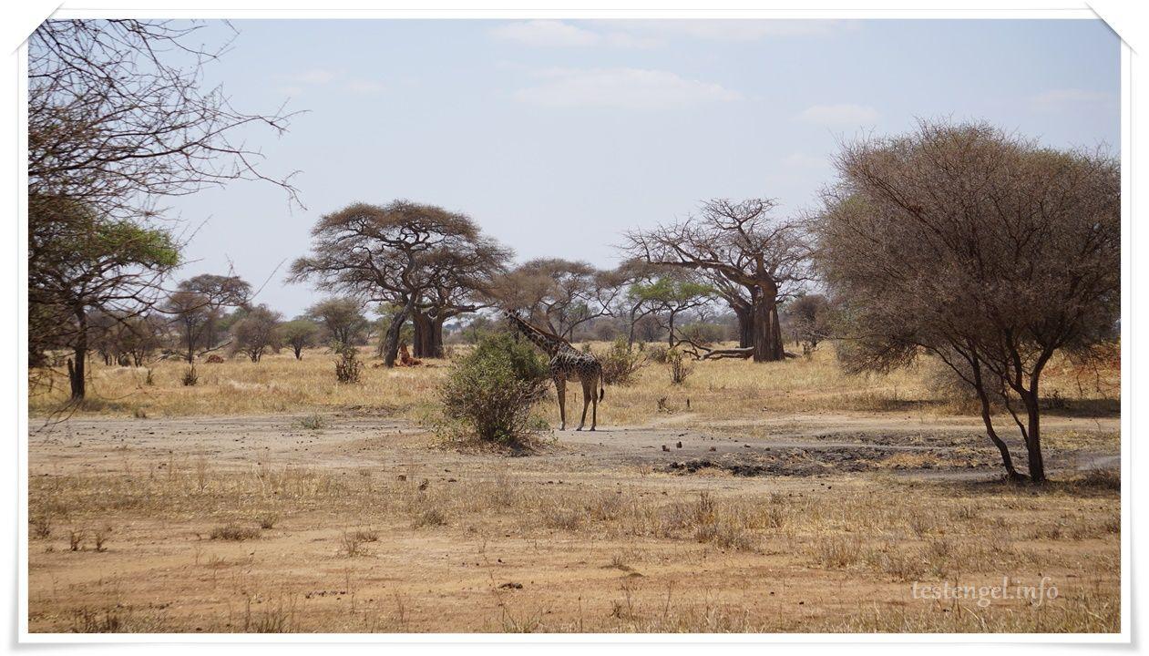 Tansania – es geht los