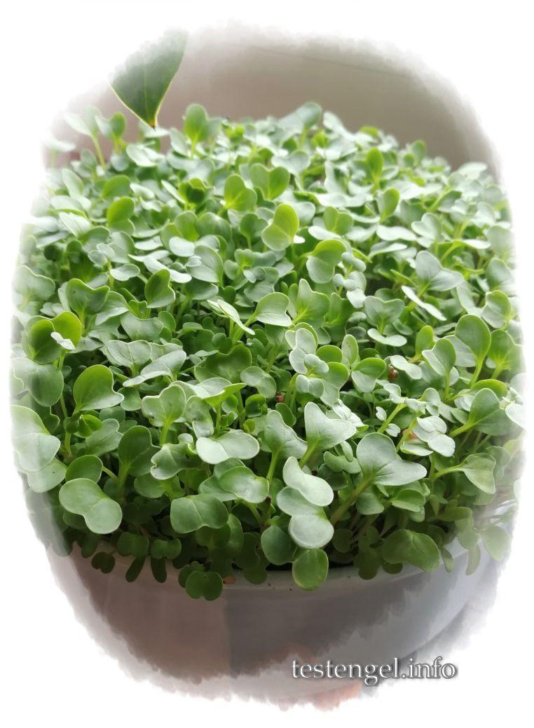 Microgreen, mein Mini-Garten