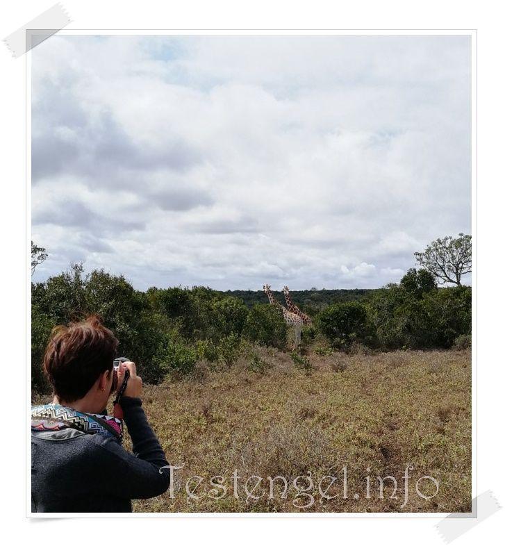 Kenia Giraffenwalk