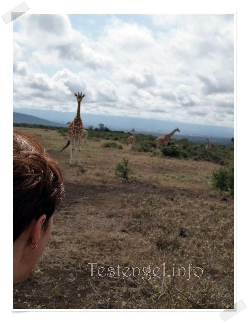 Kenia 2021 – Teil 5 – Giraffenwalk