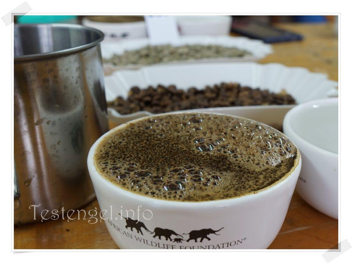 Kenia 2021 – Teil 3 – Kaffeeplantage