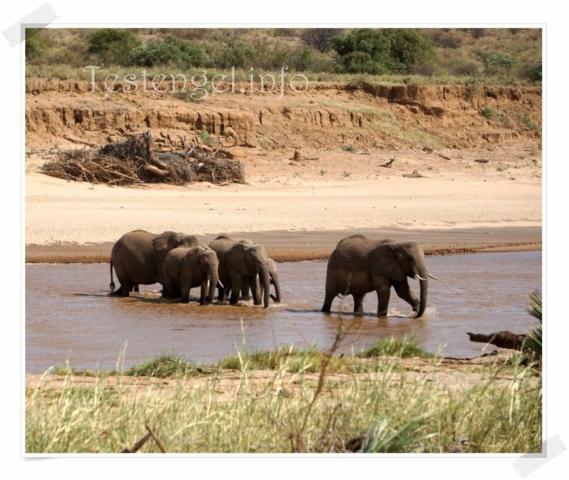 Kenia Samburu Nationalpark